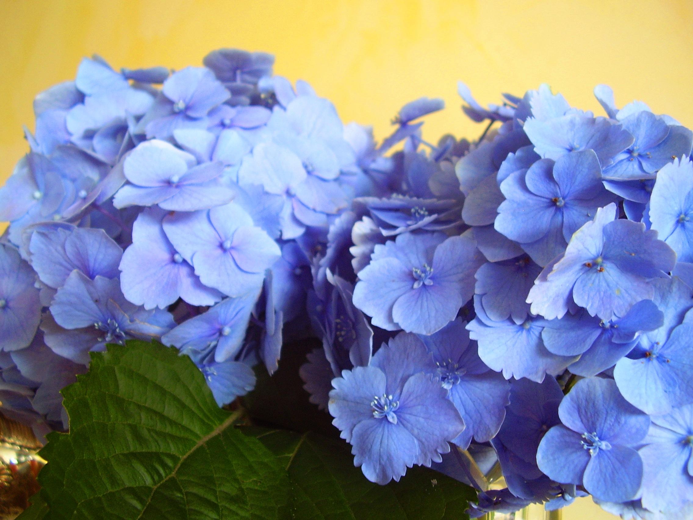 Tema Matrimonio Azzurro Polvere : Tutti i segreti per un banchetto a tema  mare